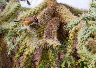 Native vegetation and birds of Phoenix, AZ